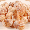 Extra Large Empty Escargot - 24 pieces - 1 pack - 24 pieces