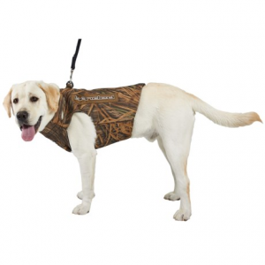 Image of Banded Dog Parka - 5mm Neoprene