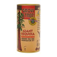Giant Sequoia Tree Grow Kit