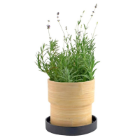 Lavender Bamboo Grow Pot